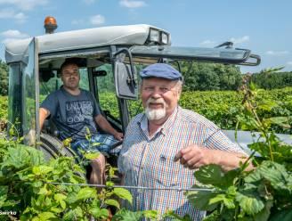 """REEKS UITSTERVEND RAS. Op bezoek bij hopboer Luc in Meldert: """"Hoofd boven water gehouden dankzij verkoop van hopscheuten"""""""