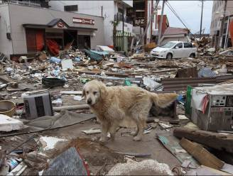 Japan doodt duizenden zwerfdieren rond kerncentrale