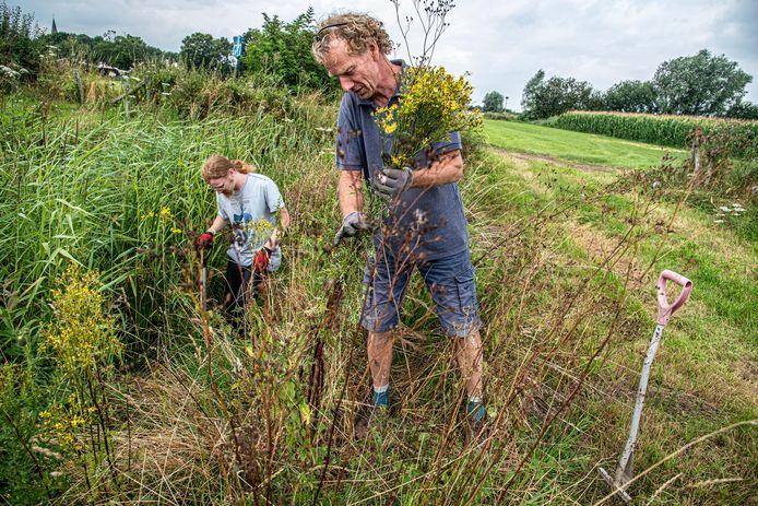 Robert (voorgrond) en zoon Marius  van Alphen halen het jacobskruiskruid tussen de grassen uit in Persingen.