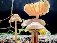 Herfst in Twente: schoonheid in alle soorten en maten en cadeautjes van de natuur
