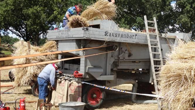 Boerendag Alphen: Brabantse nostalgie op zijn best