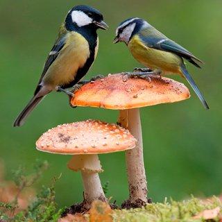 Bij de jaarlijkse vogeltelling zijn het niet alleen de vogels die tellen