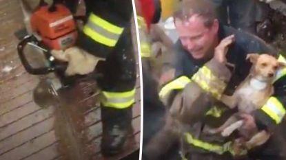 Met man en macht én kettingzaag redt brandweer doodsbange puppy