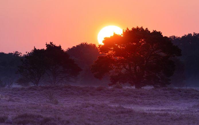 Zonsopgang in de Kalmthoutse Heide