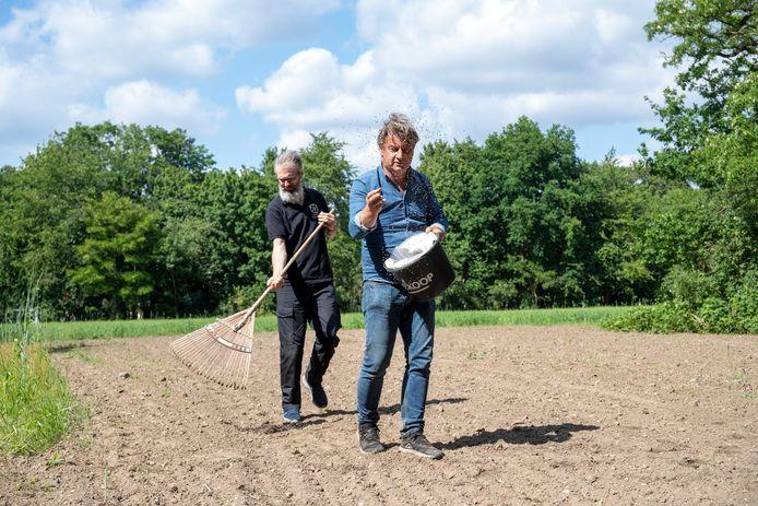 Marcel van Silfhout zaait het Brabants zandboekweit op de akker in Wageningen.