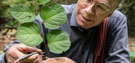Dick gaat de duizendknoop te lijf: 'We moeten die plantjes gewoon mishandelen'