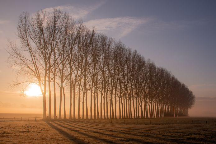 Bomenrij in de mist van Corine Ekkel.
