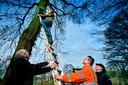 In Alblasserdam is hoog in een boom een vogelhuisje geplaatst in de strijd tegen de eikenprocessierups.