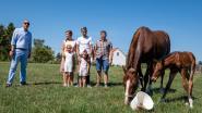 Putse paardenfokkerij die unieke werkwijze hanteert, krijgt bezoek van burgervader