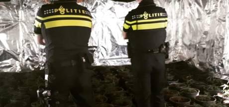 Wietkwekerij met 200 planten opgerold na klachten uit de buurt in Veenendaal