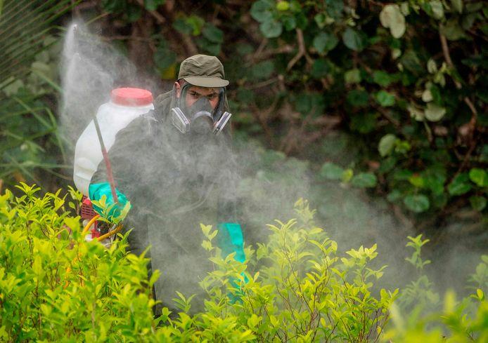 Een politieagent fumigeert cocaplnaten in Tumaco. Archiefbeeld.