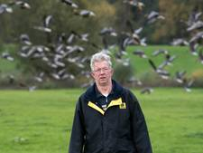 Betuwse boeren balen van ganzen
