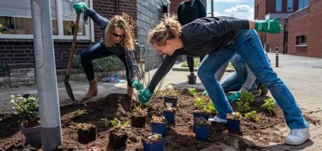 Groene Buurtjes in Breda: NK-tegelwippen kent alleen maar winnaars