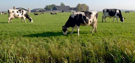 Bijna dertig Brabantse veehouders die zware wissel trekken op natuur willen stoppen