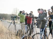 Invliegen van korhoenders naar Sallandse Heuvelrug bij Nijverdal is duur en zinloos, zegt CDA Overijssel