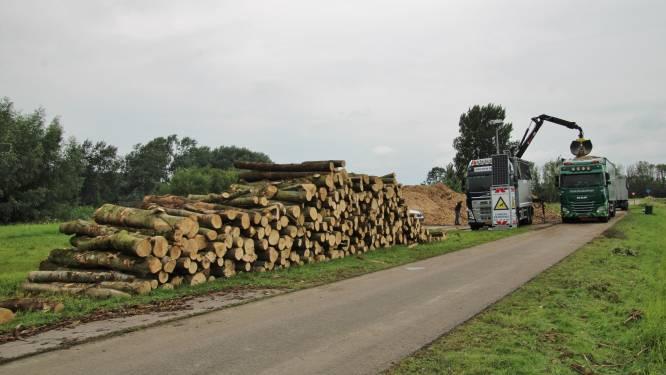 Staatsbosbeheer belooft na kappen van meer dan duizend bomen: 'In voorjaar nieuwe bomen'