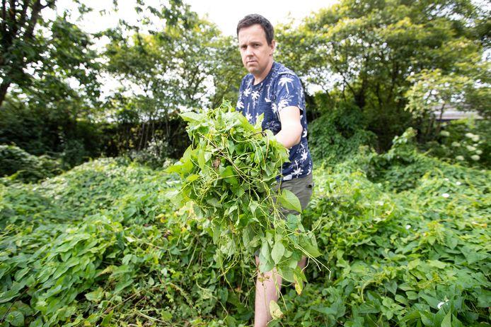 Volledige stukken openbaar groen zijn overwoekerd door de haagwinde en deze sliertige plant laat zich niet zo makkelijk verwijderen, zo demonstreert verslaggever Jeroen de Kleine.