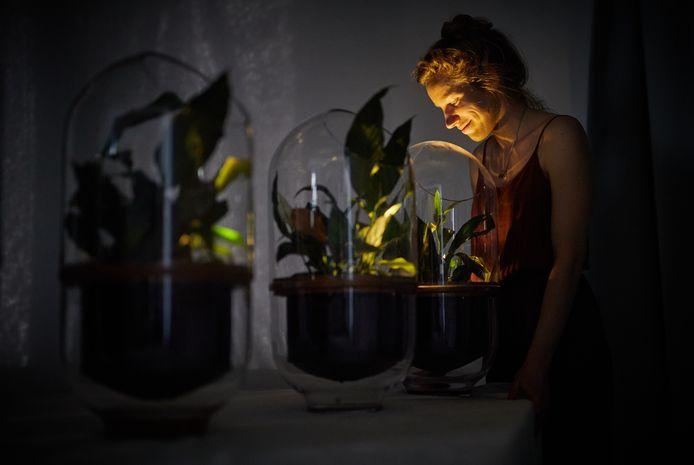 De stroom voor de ledlampjes in de Living Lights van de Rotterdamse ontwerpster Ermi van Oers wekt de kamerplant zelf op. Van Oers hoopt dat energie halen uit planten ooit heel normaal is.
