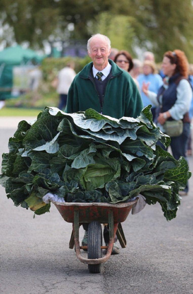 De Britse tuinder Peter Glazebrook gaat op wedstrijden steevast met de eerste prijs naar huis voor zijn gigantische kweeksels: kool in 2012. Beeld Getty