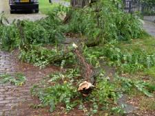 Wéér breekt grote tak af van beruchte boom in Bredase woonstraat