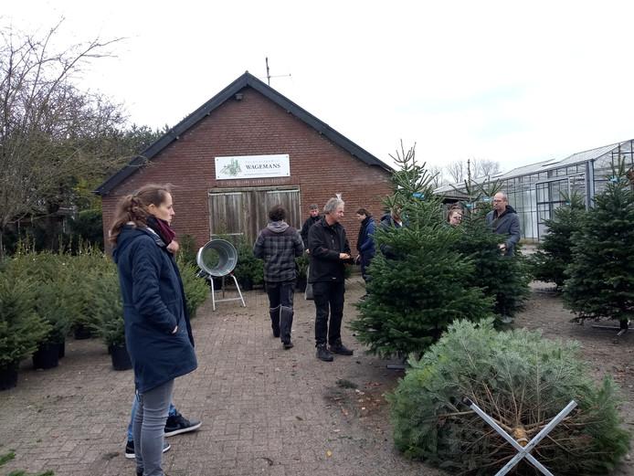 Kerstboom Nu Al In Trek In De Regio Het Gaat Heel Hard Cuijk