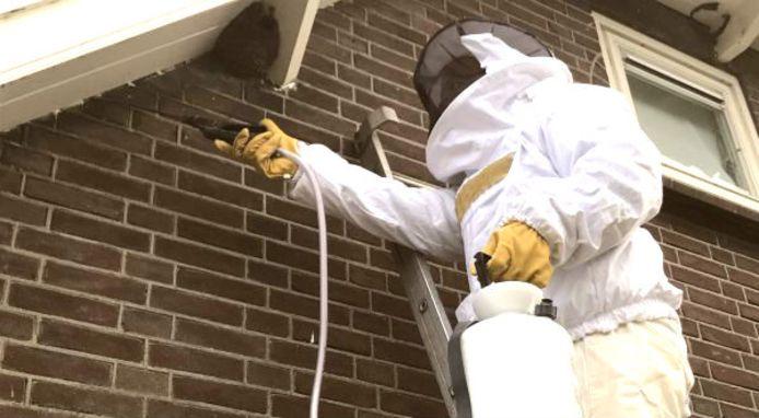 Hertger Termaat uit Putten haalt jaarlijks rond de 165 wespennesten weg in de regio.