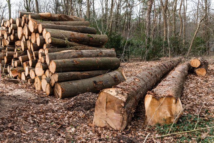 De Partij voor de Dieren in de Tweede Kamer maakt zich druk om de kap van bomen in Amersfoort.