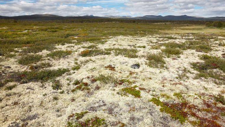 Vorsers bestudeerden de plantensoorten op vier bergtoppen in het Nationaal Park Dovrefjell in Noorwegen. Beeld thinkstock
