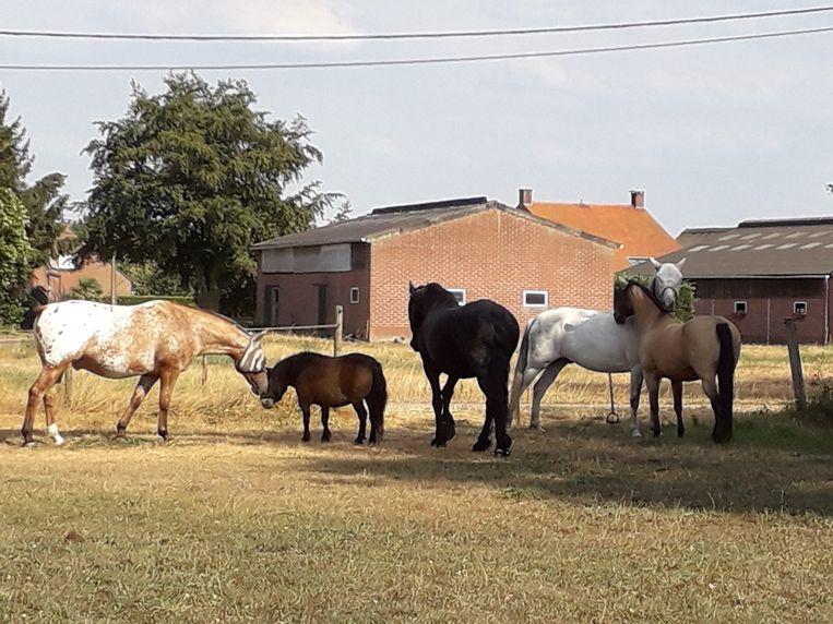 Het Spiegelend Paard stuurde dit beeld: geen raam en geen beer, maar deze paarden kunnen ook dienen :-)