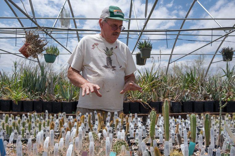 Bob Webb laat zijn verzameling cactussen zien, hij heeft er zo'n vijfduizend. Beeld Eline van Nes