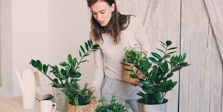 bruine-vlekjes-op-kamerplant.jpg