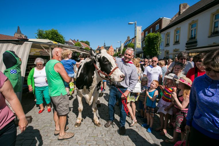 De Landbouwraad op wandel met een koe op de markt in Peer. Zo gezellig zal het nu (nog) niet worden.