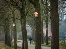 Biologische aanpak jeukrups nu in hele bebouwde kom in Haaksbergen