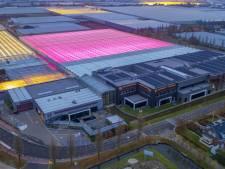 25 miljoen euro voor compensatie van energiekosten in onder meer de glastuinbouw