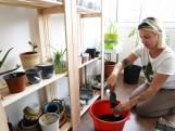 Asiel voor planten in Oosterhout: 'Een dier gooi je ook niet weg, waarom een plant wel?'