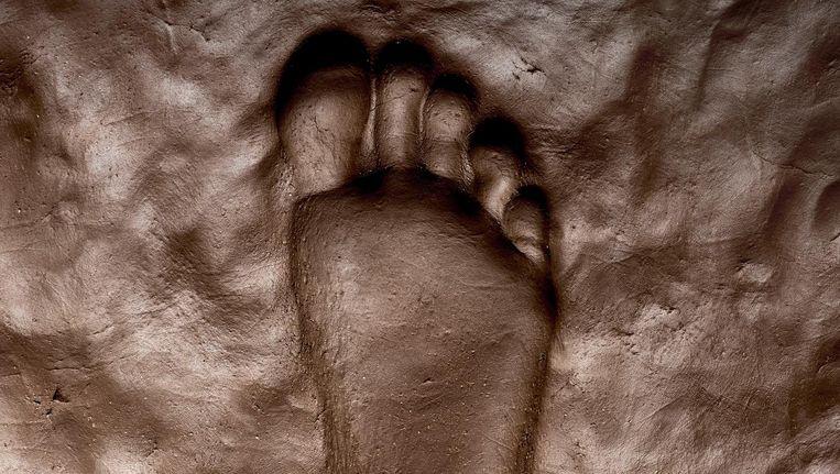 'Een verhoging in de hak, hoe laag ook, werkt door in het hele lichaam' Beeld Rein Janssen