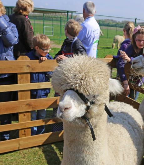 Ondernemersprijs Brielle voor lunchroom, traiteur of alpaca-fokkerij