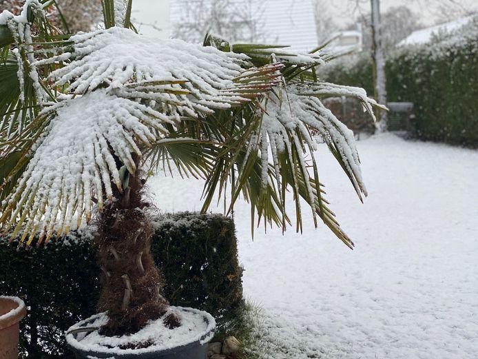 Brabant bedekt onder een laagje sneeuw