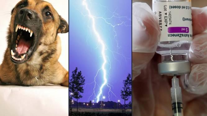OVERZICHT. Kans is groter dat u sterft aan hondenbeet of blikseminslag dan aan vaccinatie met AstraZeneca