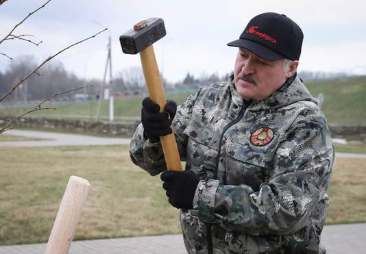 Loekasjenko deed zaterdag mee aan een zogenoemde Schoonmaakdag in zijn land. Hij plantte onder meer jonge bomen.