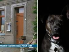 """Une petite fille de 8 ans tuée par un American Staff à Strépy: """"Ne laissez jamais un enfant seul avec un chien"""""""