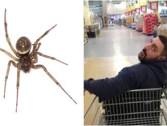Een banale beet van een spin kostte Andy een been