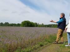 Struinen door nieuw stukje bloemrijke natuur in Markdal: 'Een parel is het'