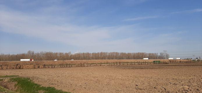 Bomenkap in de Oranjepolder.