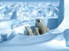 La banquise de l'Arctique fond plus vite que prévu