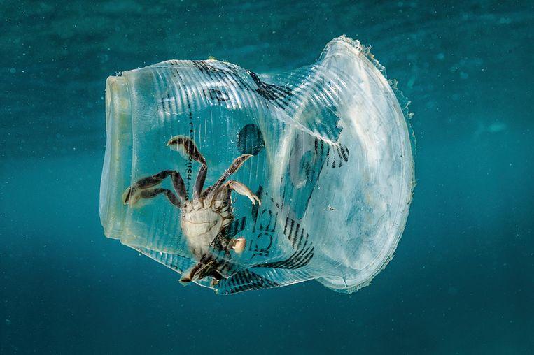Een krab zit gevangen in een plastic bekertje bij de Filipijnen. Daar worden dagelijks 163 miljoen plastic voorwerpen , die slechts 1 keer zijn gebruikt, gedumpt. Beeld EPA
