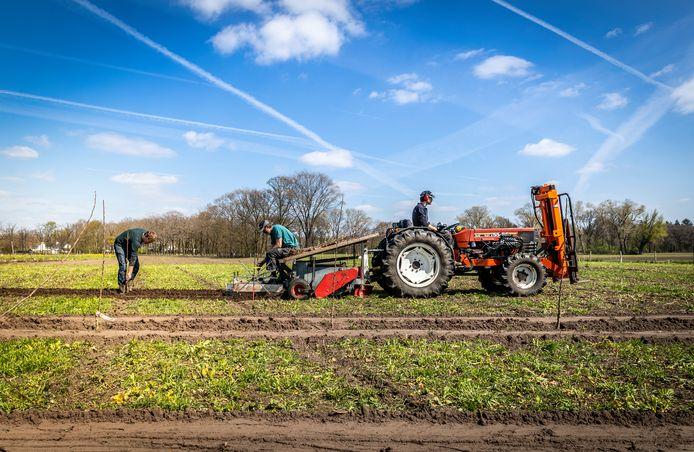 Herenboeren bezig met een uitbreiding met laagstamboomgaard in Soerendonk: Wytse de Jong, Charel Joncheren (achter op de tractor) en Peter van Deurzen (tractor).