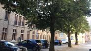 """Lindebomen in gevaar bij collectorwerken: """"We doen er alles aan om ze te bewaren"""""""