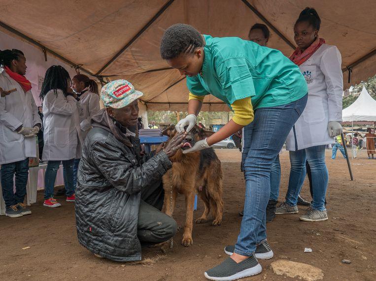 Organisaties zoals het TNR-fonds steriliseren en vaccineren straathonden, dat is veel goedkoper dan de medicatie tegen hondsdolheid.  Beeld TNR Trust