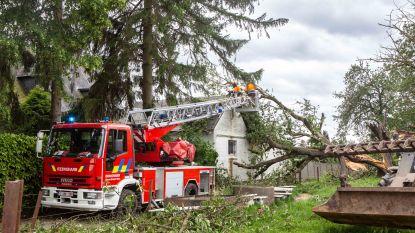 Brandweerzone verwerkt 150 oproepen: voornamelijk omgewaaide bomen